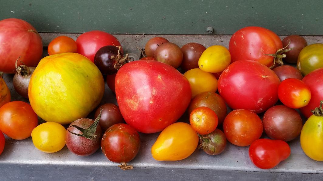 wann pflanzt man tomaten tomaten im eigenanbau richtig. Black Bedroom Furniture Sets. Home Design Ideas
